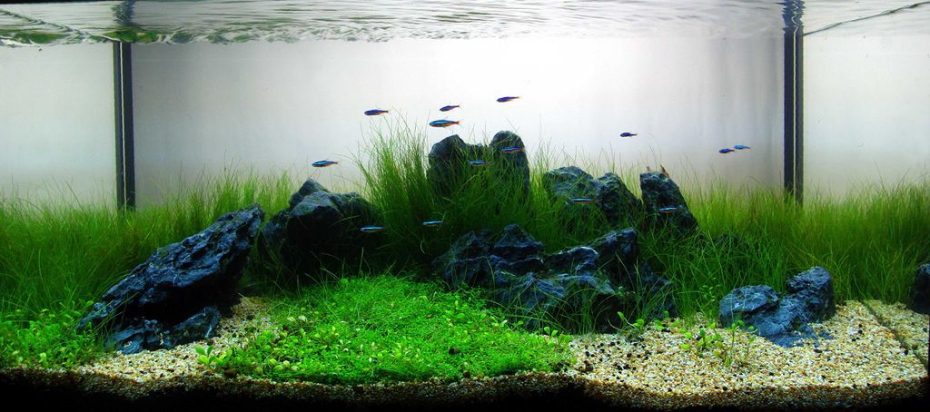 The International Aquatic Plants Layout Contest 2011 1063