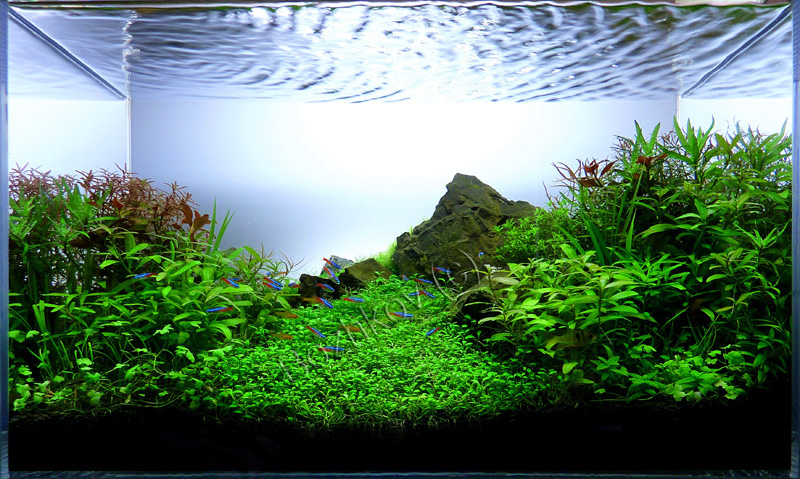 The International Aquatic Plants Layout Contest 2011 110