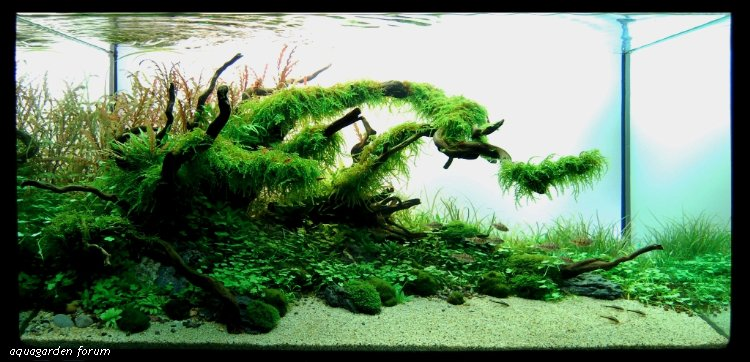 The International Aquatic Plants Layout Contest 2011 112