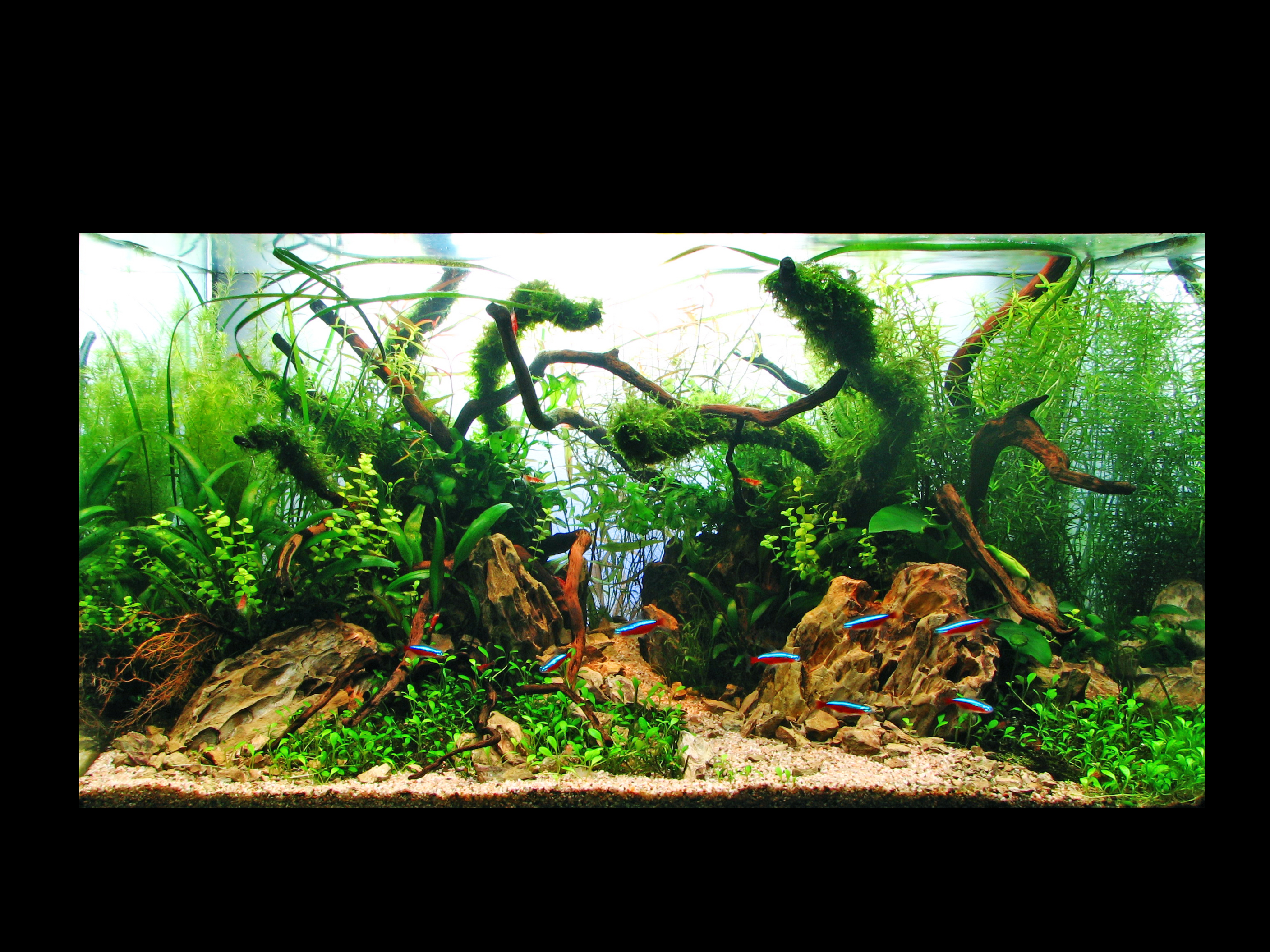 The International Aquatic Plants Layout Contest 2011 123