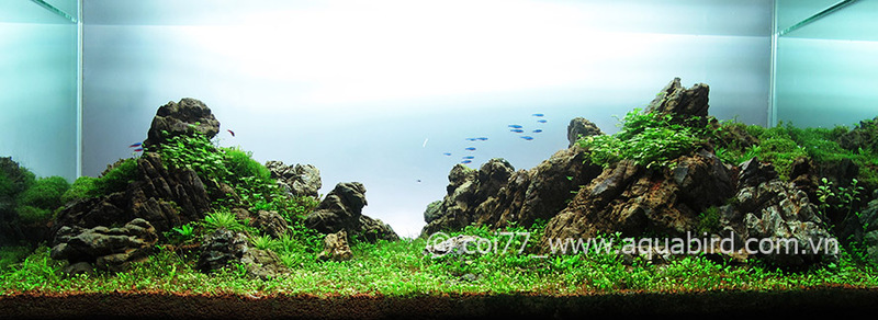 The International Aquatic Plants Layout Contest 2011 131