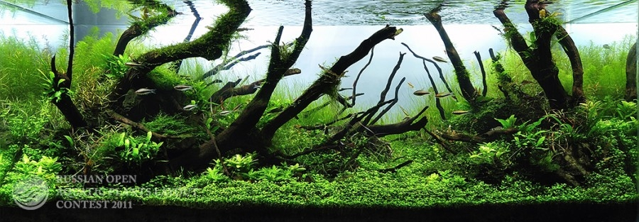The International Aquatic Plants Layout Contest 2011 136