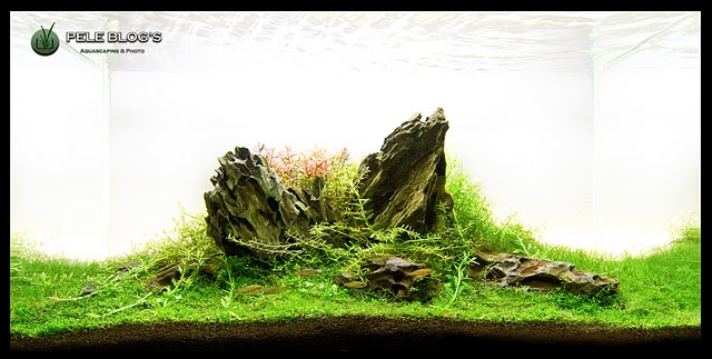 The International Aquatic Plants Layout Contest 2011 143