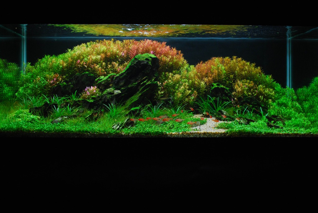 The International Aquatic Plants Layout Contest 2011 159
