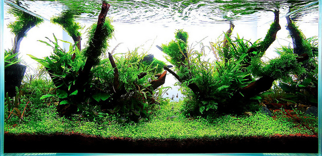 The International Aquatic Plants Layout Contest 2011 167