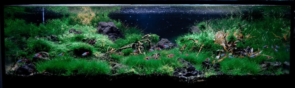 The International Aquatic Plants Layout Contest 2011 175