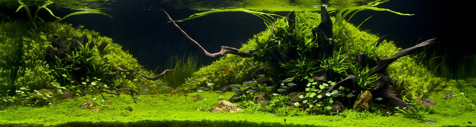 The International Aquatic Plants Layout Contest 2011 190