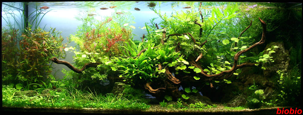 The International Aquatic Plants Layout Contest 2011 196