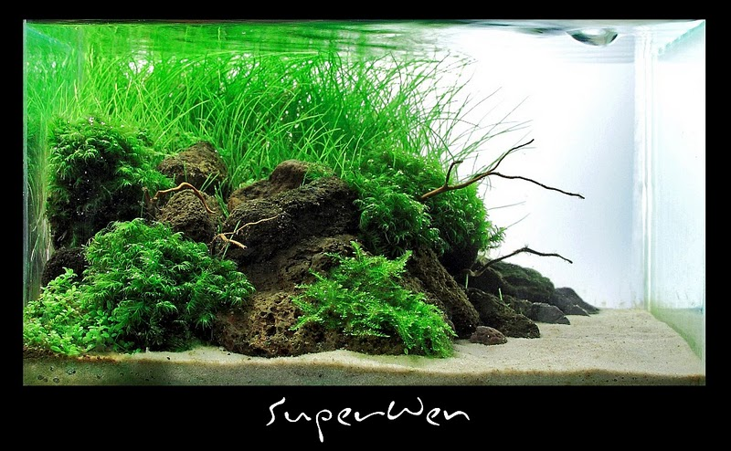 The International Aquatic Plants Layout Contest 2011 201