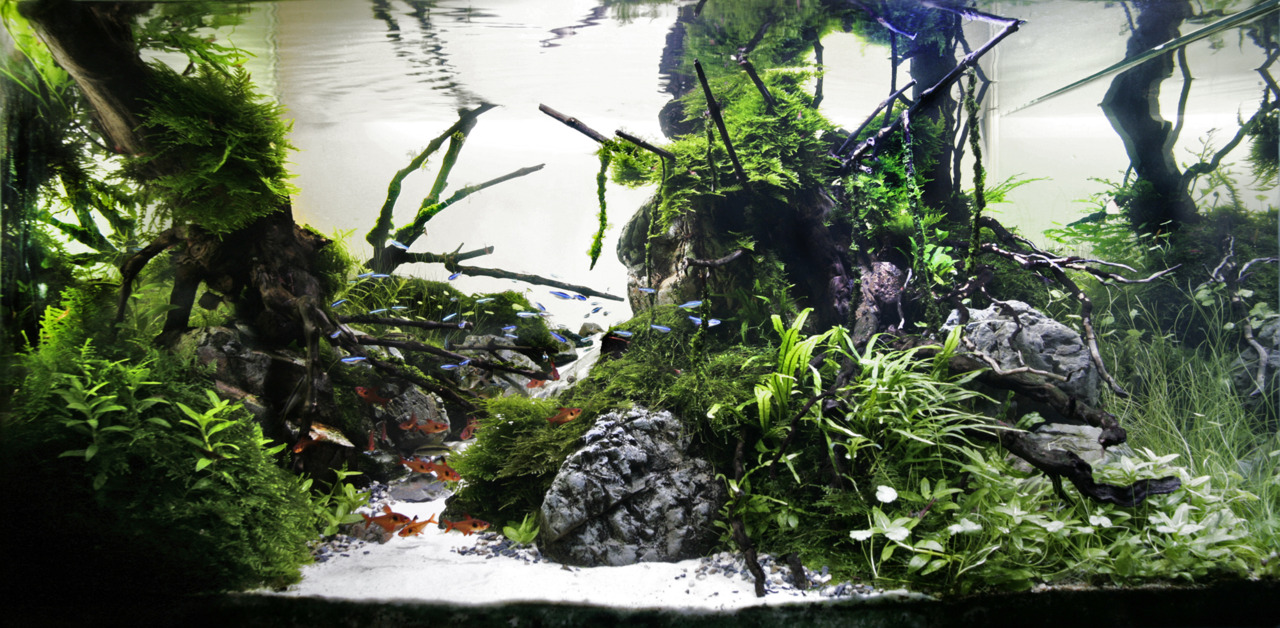 The International Aquatic Plants Layout Contest 2011 206
