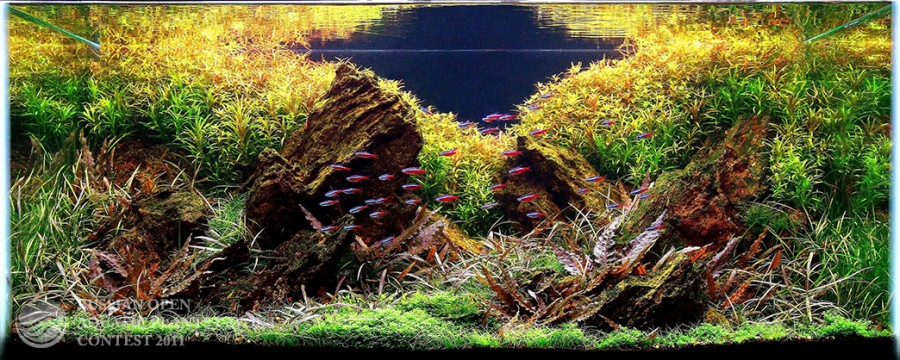 The International Aquatic Plants Layout Contest 2011 21