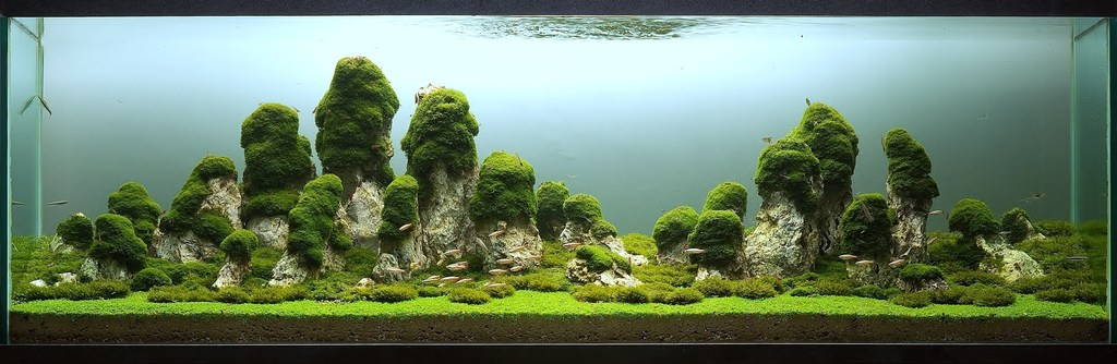 The International Aquatic Plants Layout Contest 2011 22