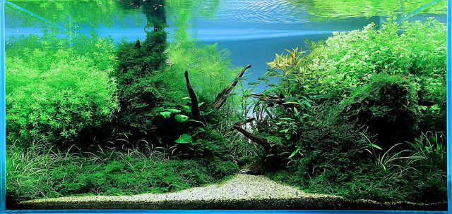 The International Aquatic Plants Layout Contest 2011 227