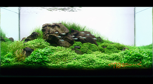 The International Aquatic Plants Layout Contest 2011 232