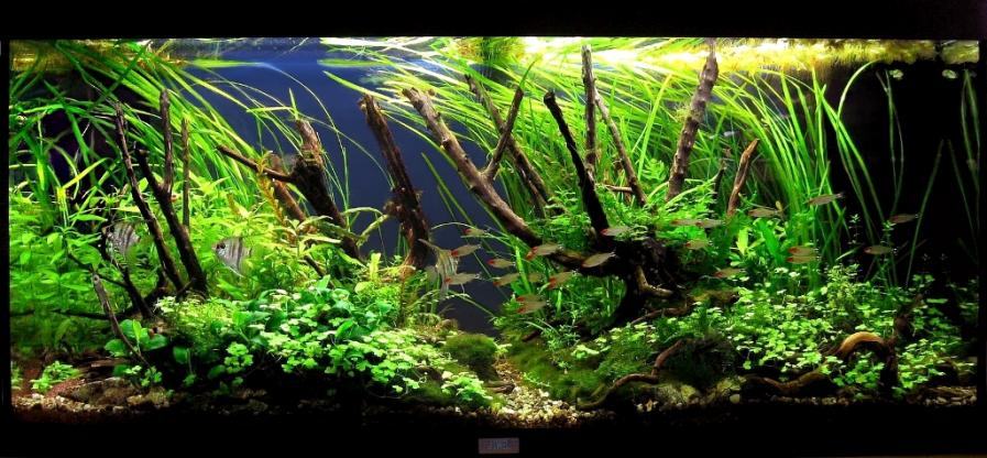 The International Aquatic Plants Layout Contest 2011 233