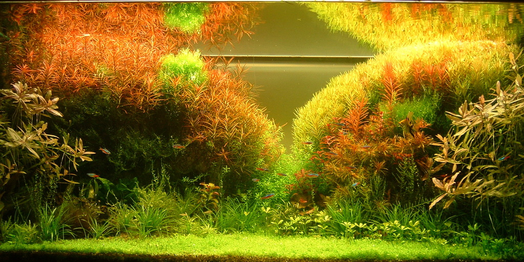 The International Aquatic Plants Layout Contest 2011 257