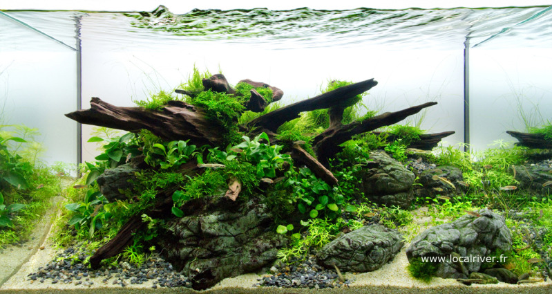 The International Aquatic Plants Layout Contest 2011 277