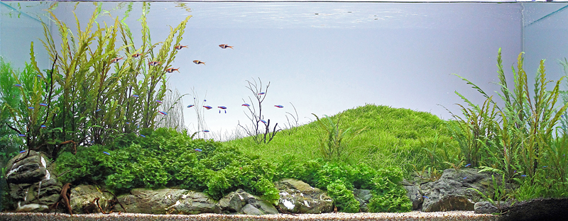 The International Aquatic Plants Layout Contest 2011 280