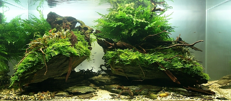 The International Aquatic Plants Layout Contest 2011 286