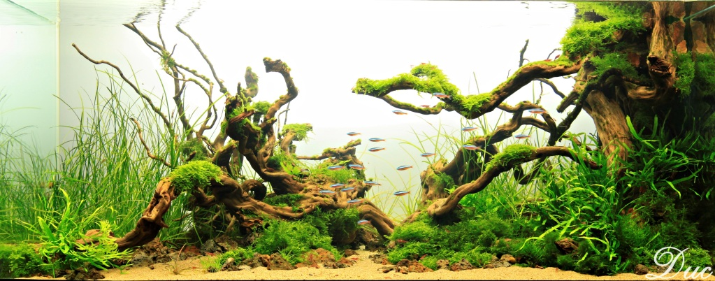 The International Aquatic Plants Layout Contest 2011 305