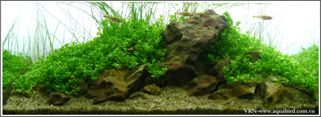 The International Aquatic Plants Layout Contest 2011 306