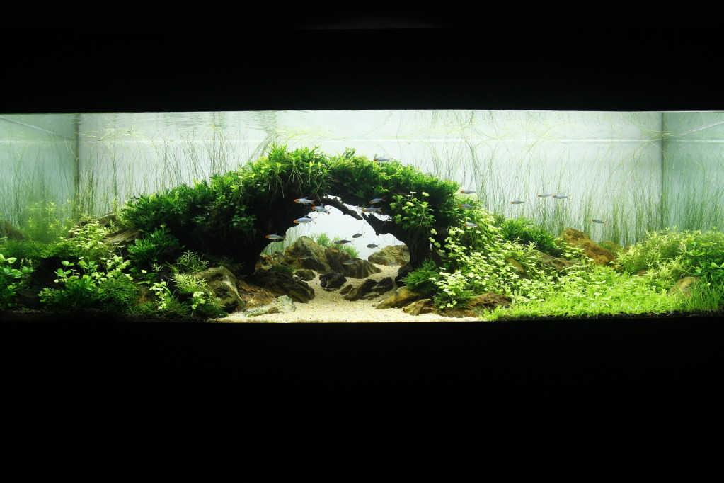 The International Aquatic Plants Layout Contest 2011 315