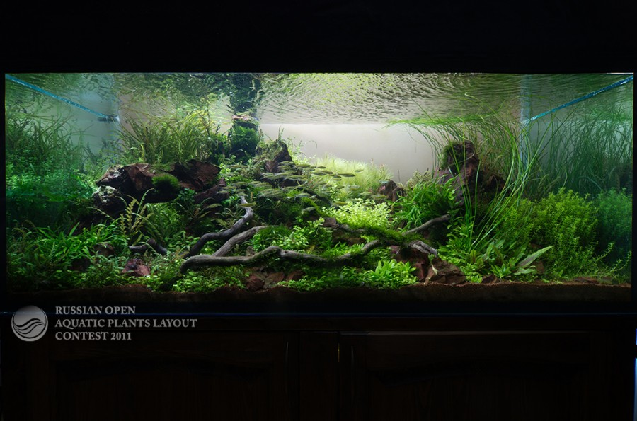 The International Aquatic Plants Layout Contest 2011 32