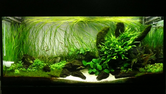 The International Aquatic Plants Layout Contest 2011 3241