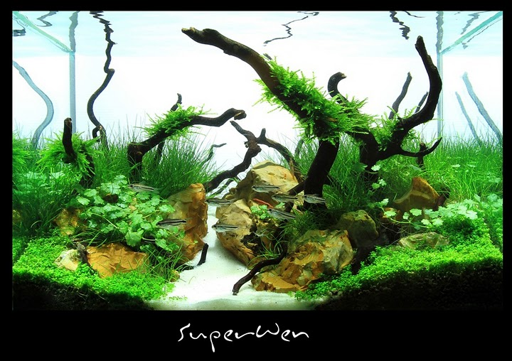 The International Aquatic Plants Layout Contest 2011 343