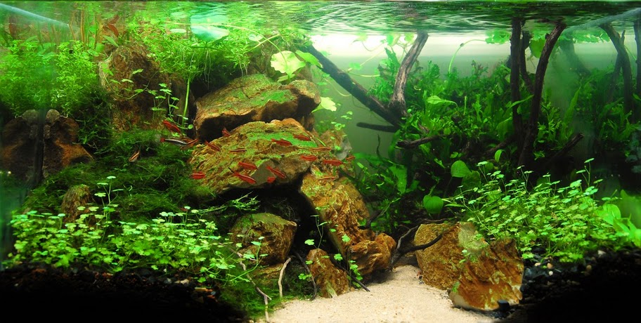 The International Aquatic Plants Layout Contest 2011 423