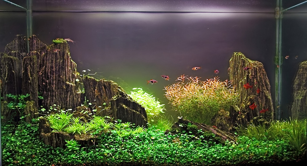 The International Aquatic Plants Layout Contest 2011 425