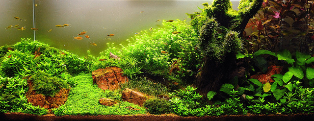 The International Aquatic Plants Layout Contest 2011 434