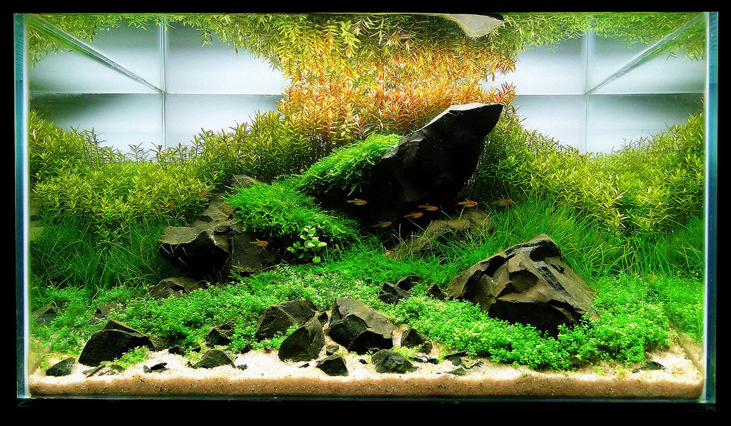 The International Aquatic Plants Layout Contest 2011 441