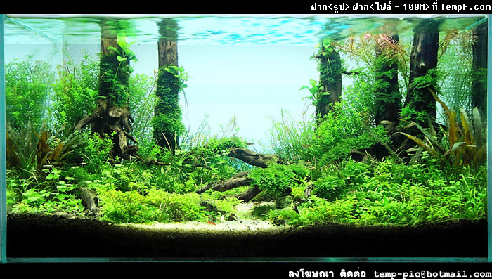 The International Aquatic Plants Layout Contest 2011 45