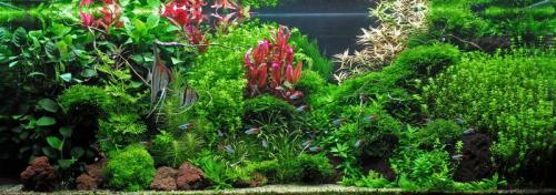 The International Aquatic Plants Layout Contest 2011 464