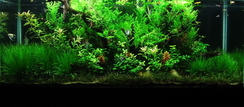 The International Aquatic Plants Layout Contest 2011 494