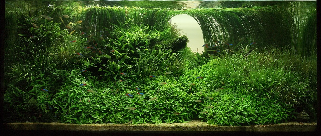 The International Aquatic Plants Layout Contest 2011 50