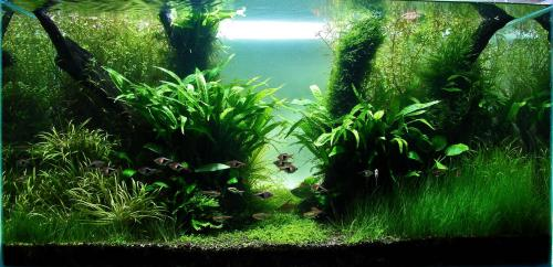 The International Aquatic Plants Layout Contest 2011 521
