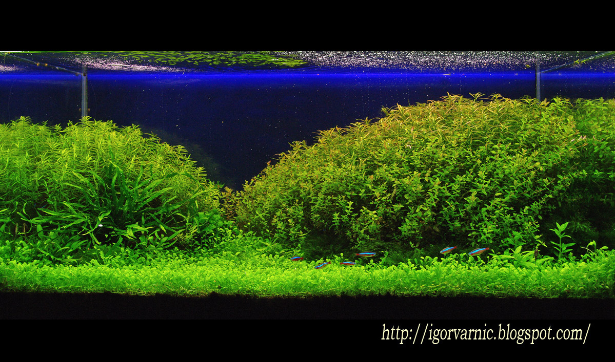 The International Aquatic Plants Layout Contest 2011 555