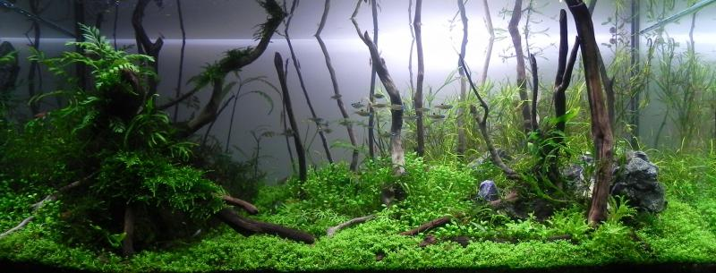 The International Aquatic Plants Layout Contest 2011 625