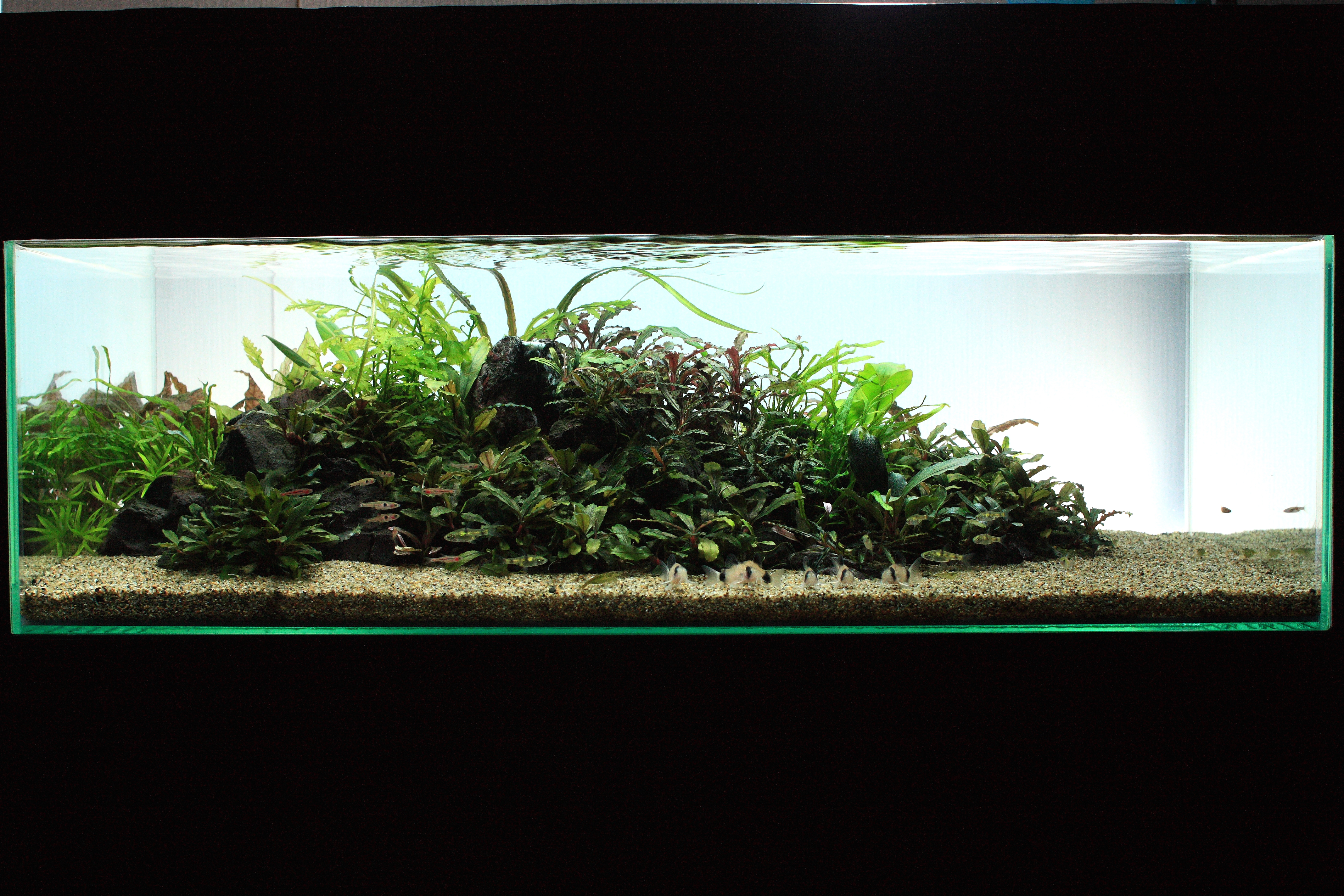 The International Aquatic Plants Layout Contest 2011 662
