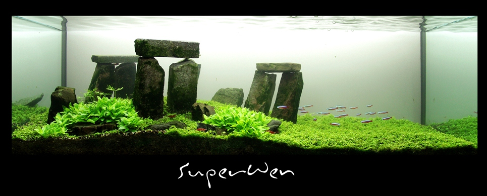 The International Aquatic Plants Layout Contest 2011 669