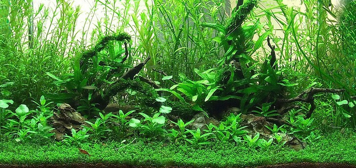 The International Aquatic Plants Layout Contest 2011 675