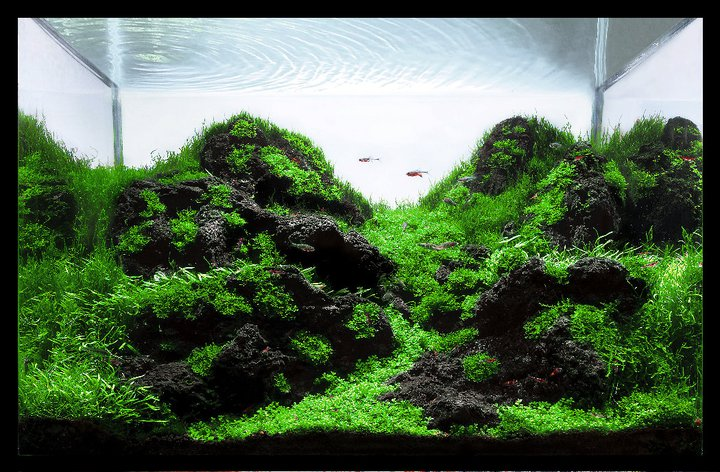 The International Aquatic Plants Layout Contest 2011 70