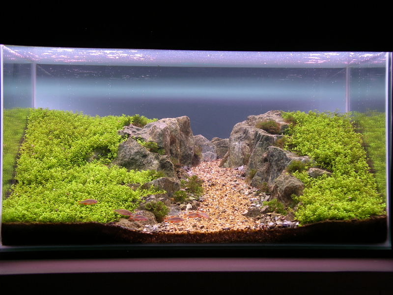 The International Aquatic Plants Layout Contest 2011 718