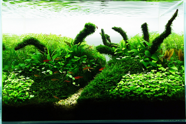 The International Aquatic Plants Layout Contest 2011 737