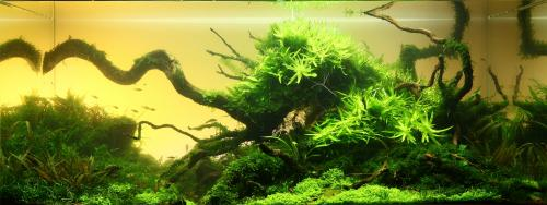 The International Aquatic Plants Layout Contest 2011 754