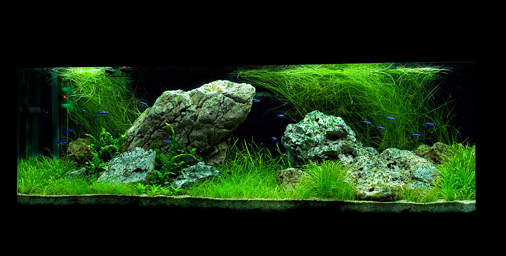 The International Aquatic Plants Layout Contest 2011 76