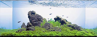 The International Aquatic Plants Layout Contest 2011 77