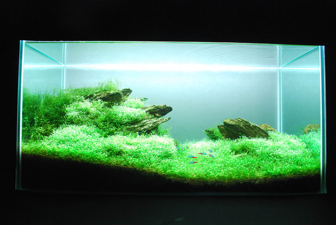 The International Aquatic Plants Layout Contest 2011 788